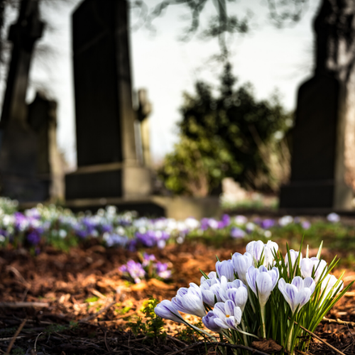 Image of Flowers in Cemetery